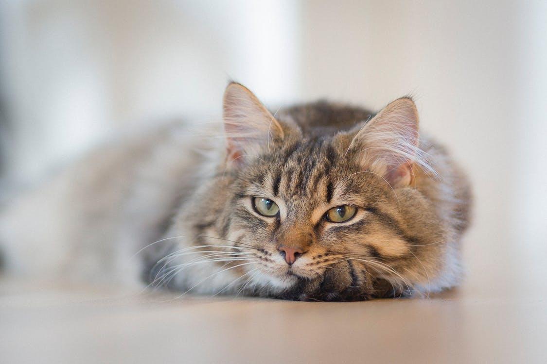 shiny cat