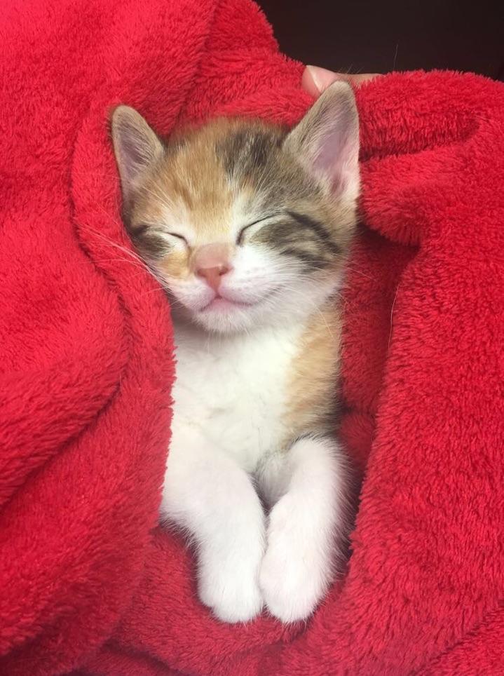 Shelley's future therapy cat, Kida