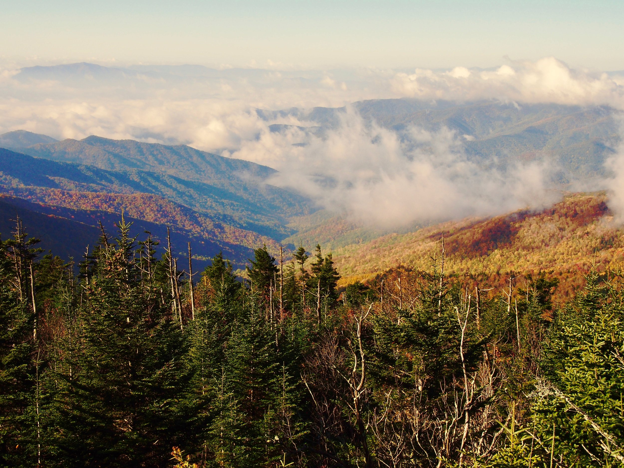 View from the Clingman's Dome Parking Lot.
