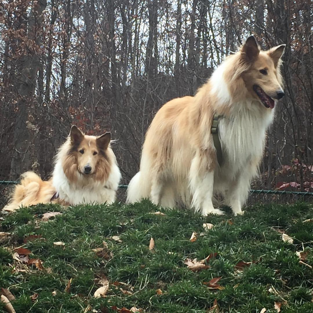 Superb! Canine Cabins called me to check on Callie's feeding instructions because they were different than 6 months ago. They had indeed changed. Impressive! Callie enjoyed herself and was treated very well.   Lorraine - Callie & Daisy