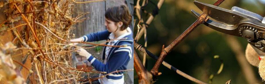 Winter is the ideal time to schedule pruning for many tree species