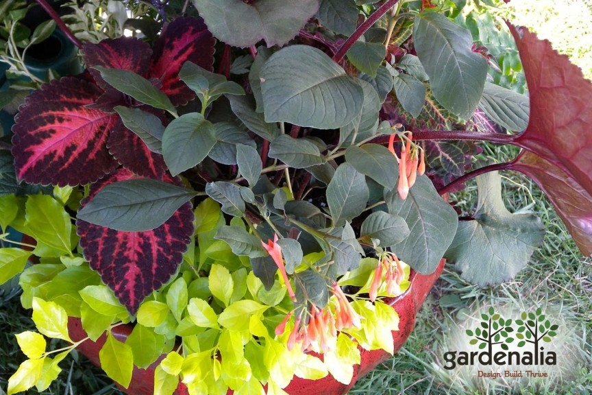 Planting - Annual Plantings provide long lasting seasonal color in your garden. From spring to winter, seasonal containers and bedding plantings enhance your garden with spots of color and textures. Spring Bulbs bring the first flower of spring