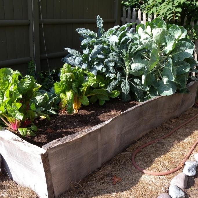 Kitchen Gardens -