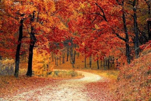 Deciduous Trees -