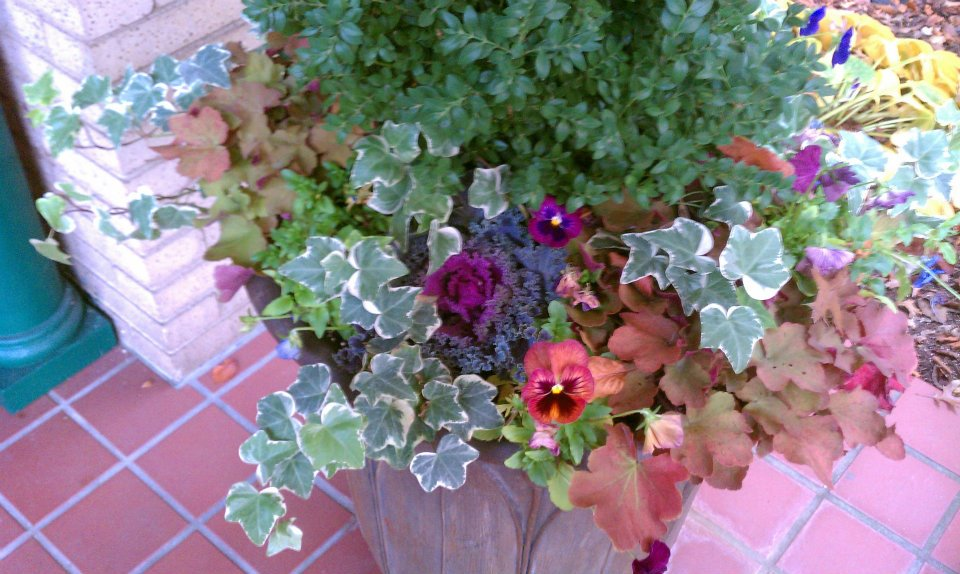 Gardening: Container - Container gardening is a fantastic option for anyone interested in gardening.