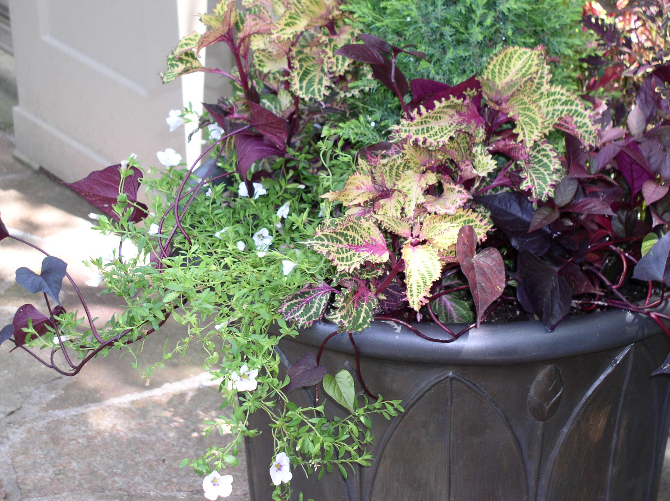 leafplanter2.jpg