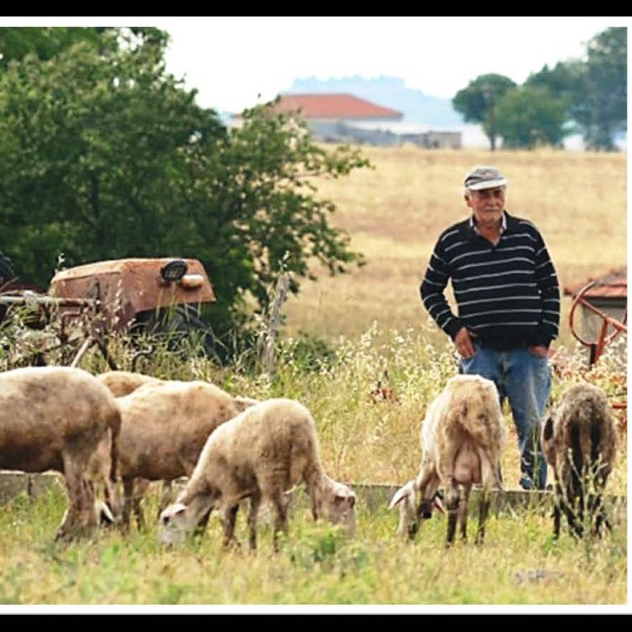 2018-04-15-W3MT2 - Bishop (2018) W3MT Image - Shepherd and his grandson, each uniquely caring for their flock in a small village in Thessaly, Greece.jpg