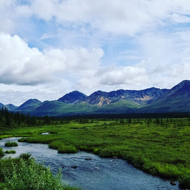 So far summer has been full of all things outside. Just got home from three days of camping up near Denali. The High One kept hidden in the clouds but we still found plenty of stunning scenery. I love summer here and using it to gather inspiration for a long winter in the studio.  #alaska #sharingalaska #mountainsfordays #mountaindelirium #inspiredbynature