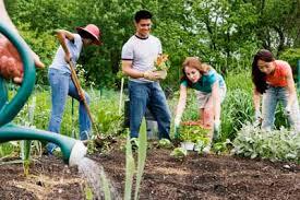 community garden 1.jpg
