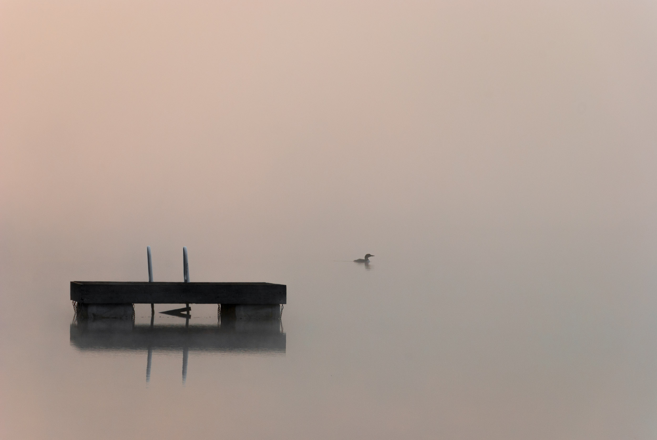 A solitary loon on the water near Algonquin Park