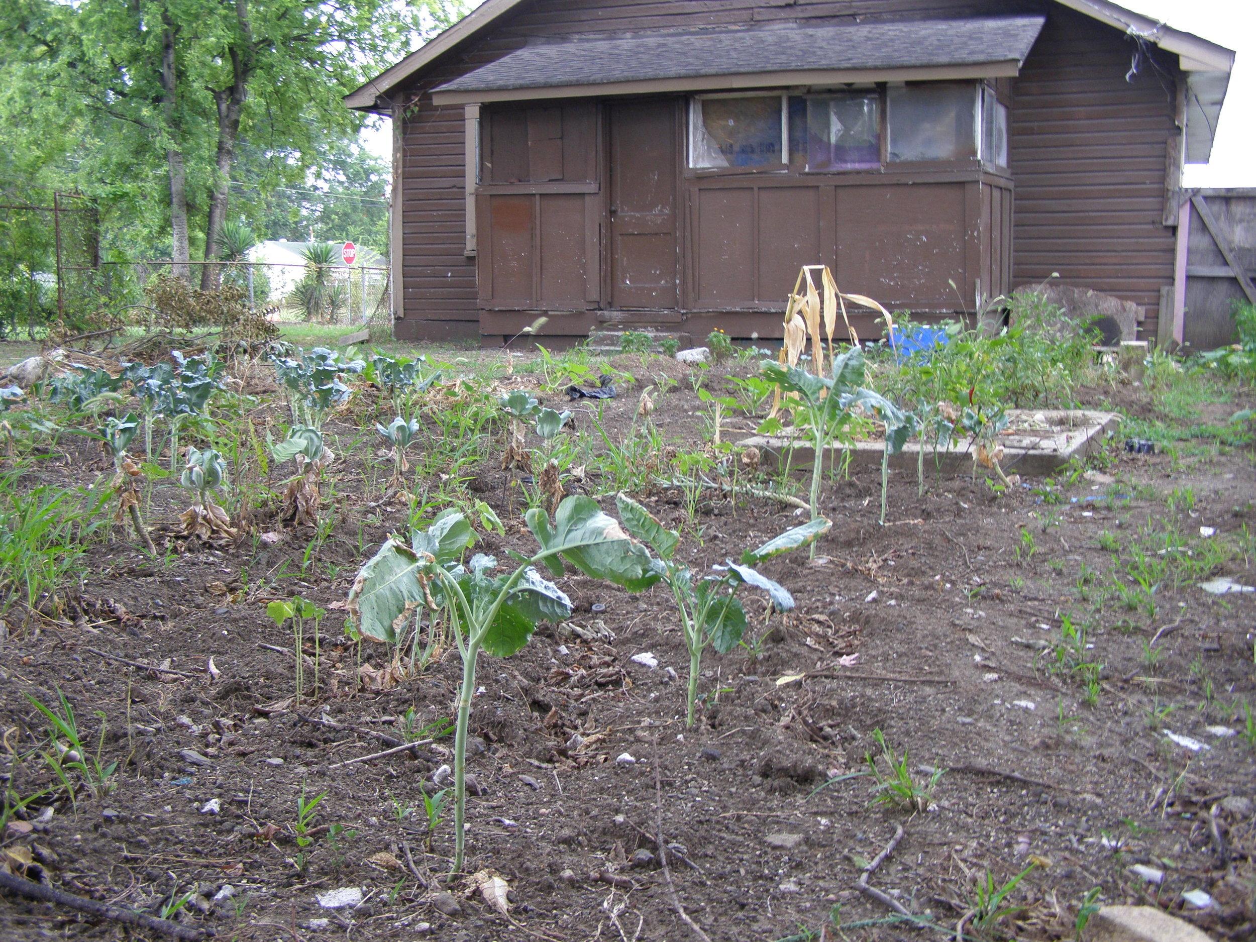 A garden in N. Birmingham, AL
