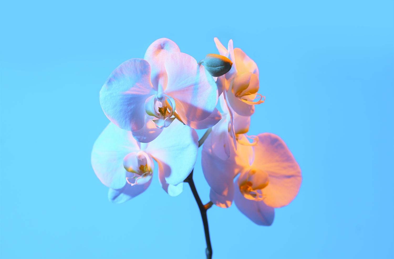 flower for IG.jpg