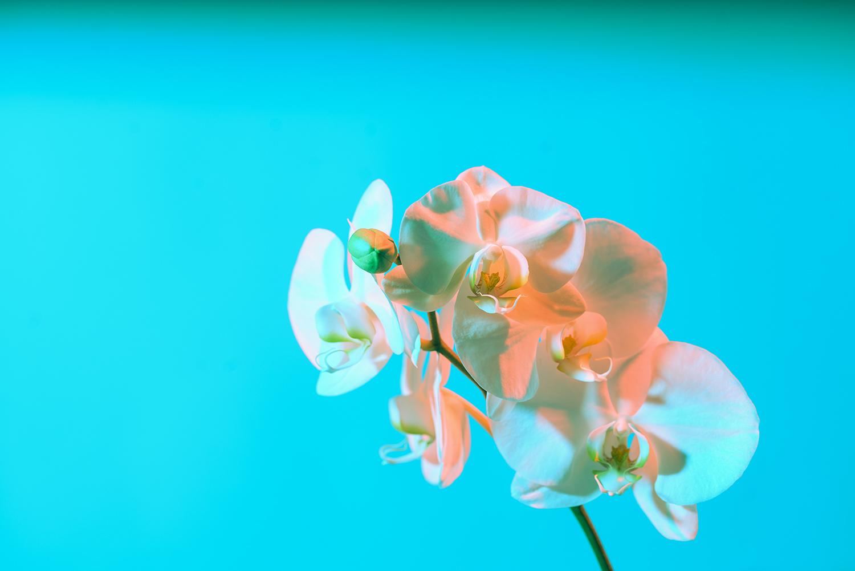 flower for ig 3.jpg