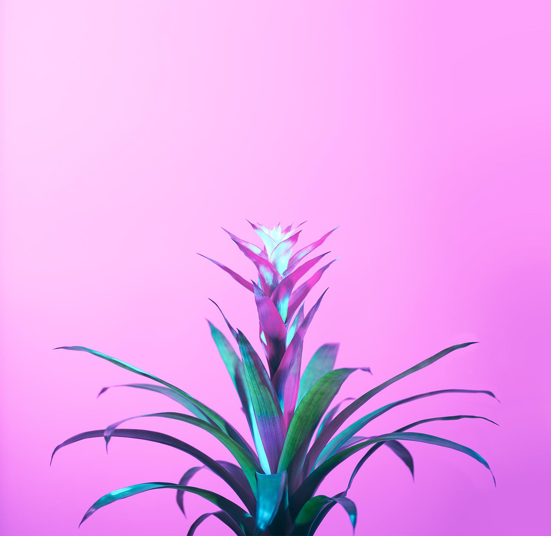Bromeliad, 2017