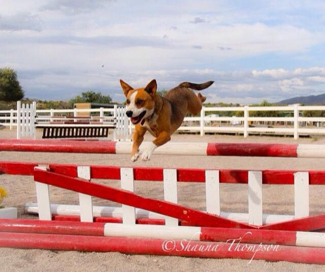 Zuri flying into her new life