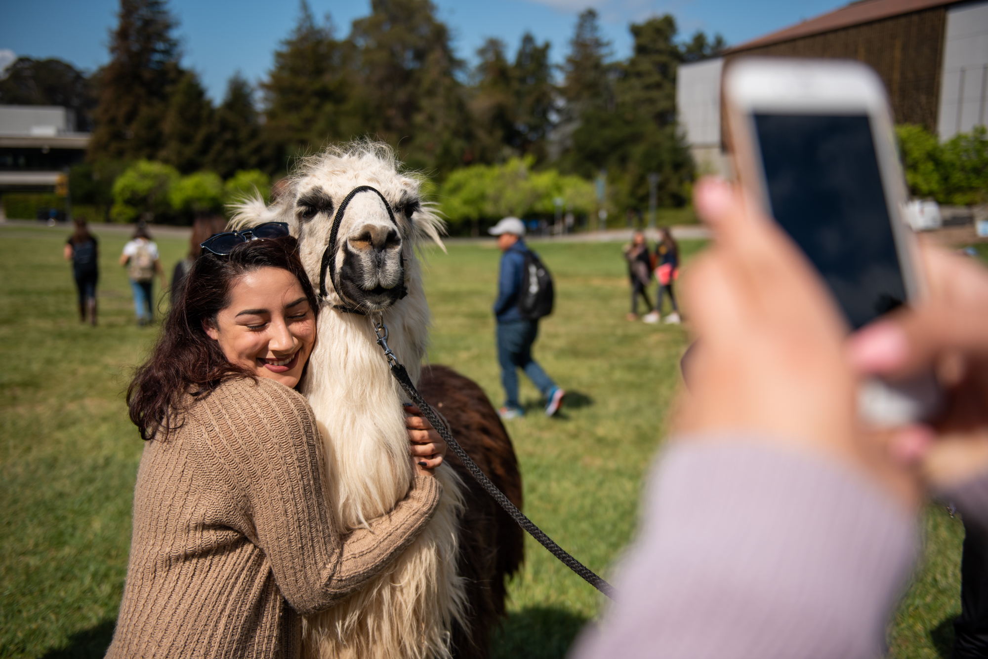 Junior Karen Gutierrez hugs Tambo the llama at UC Berkeley to help ease stress before final exams on Friday, April 27, 2018. | Rosa Furneaux, Special To The Chronicle