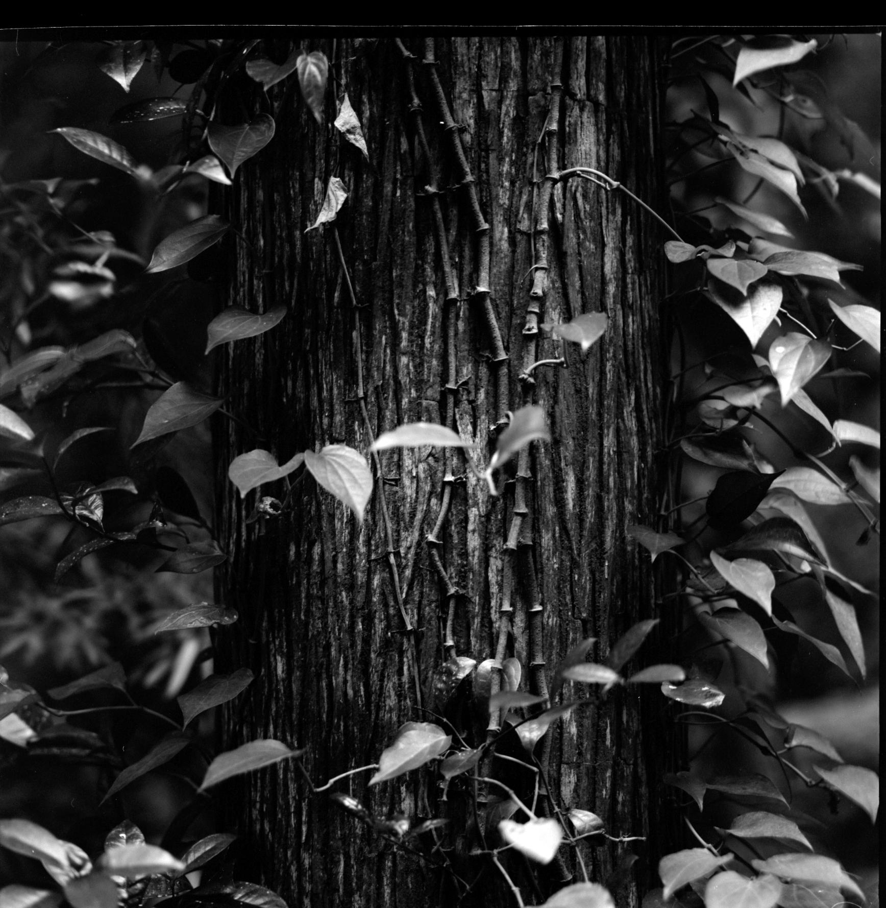 Caldera Jungle I.jpg