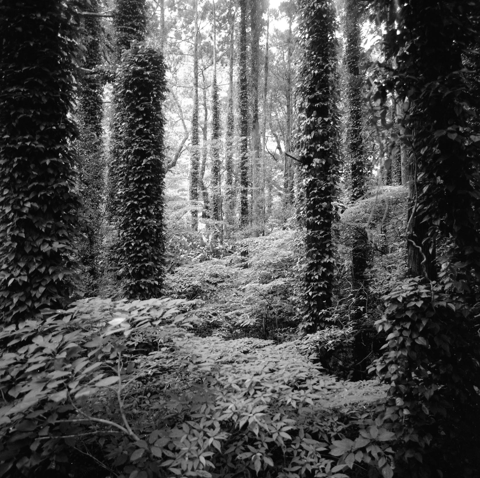 Caldera Jungle II.jpg
