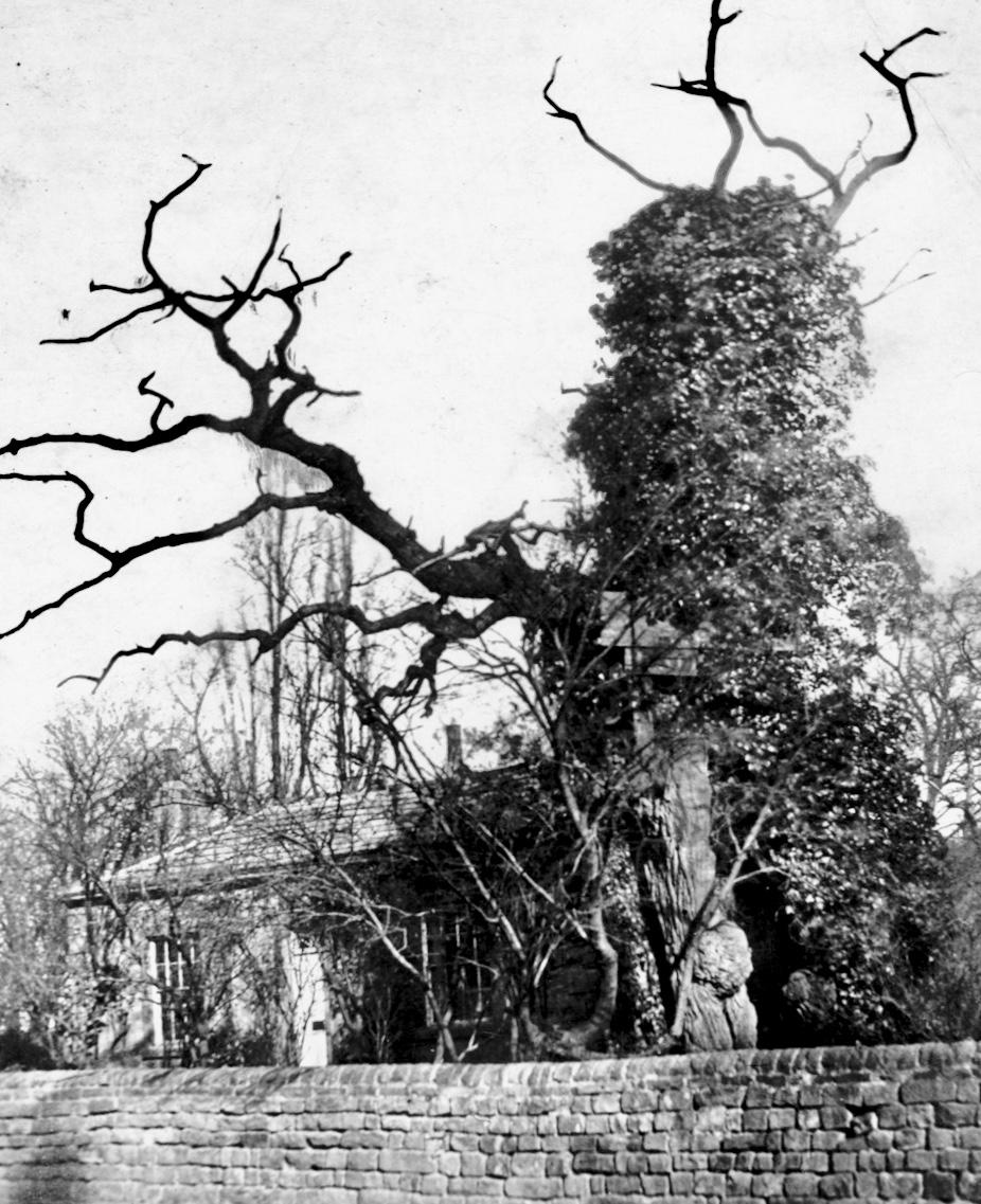 Shire Oak, circa 1890