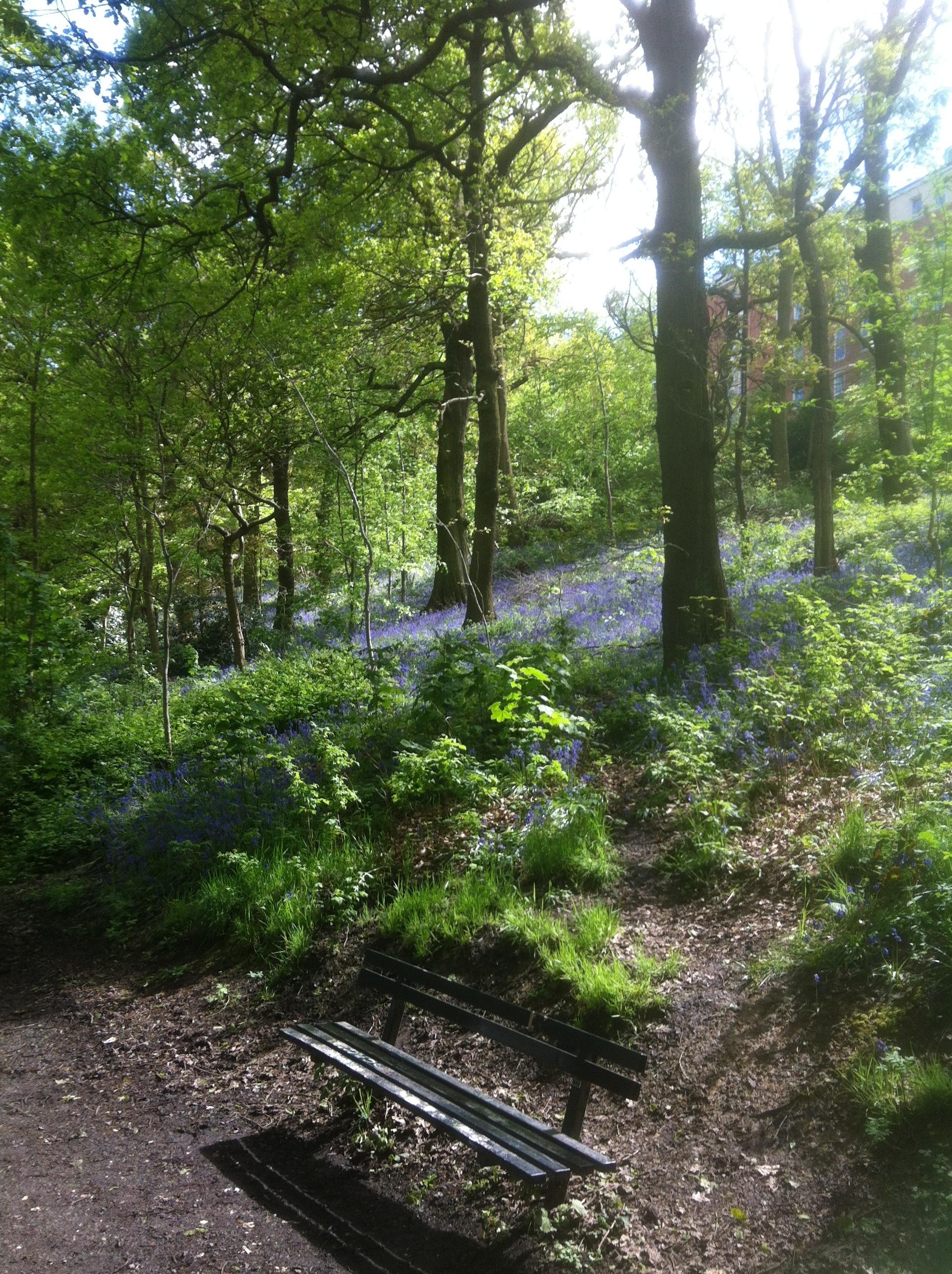 Batty's Wood, Woodhouse Ridge © RT