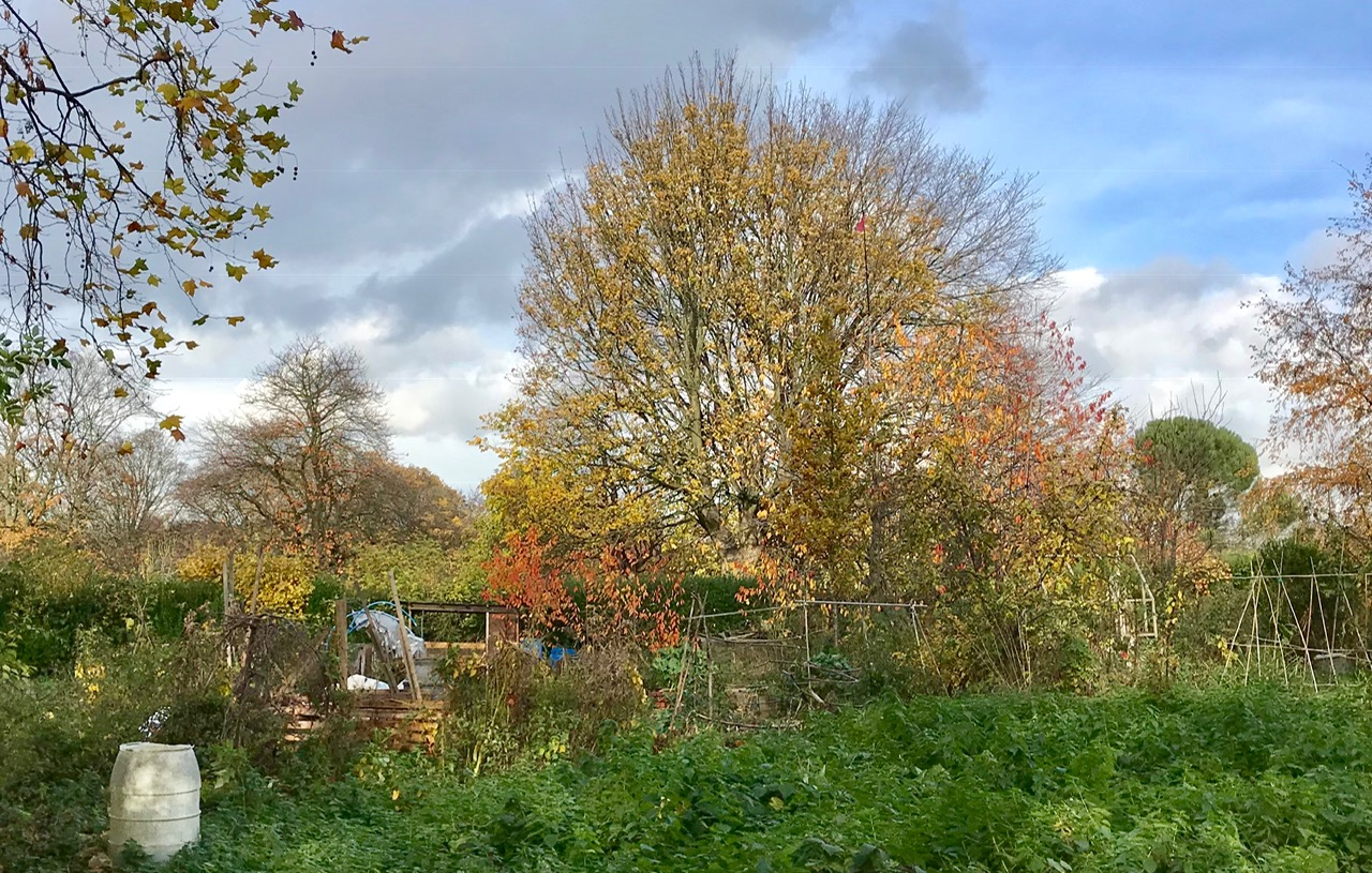 Allotments, Woodhouse Moor © HP