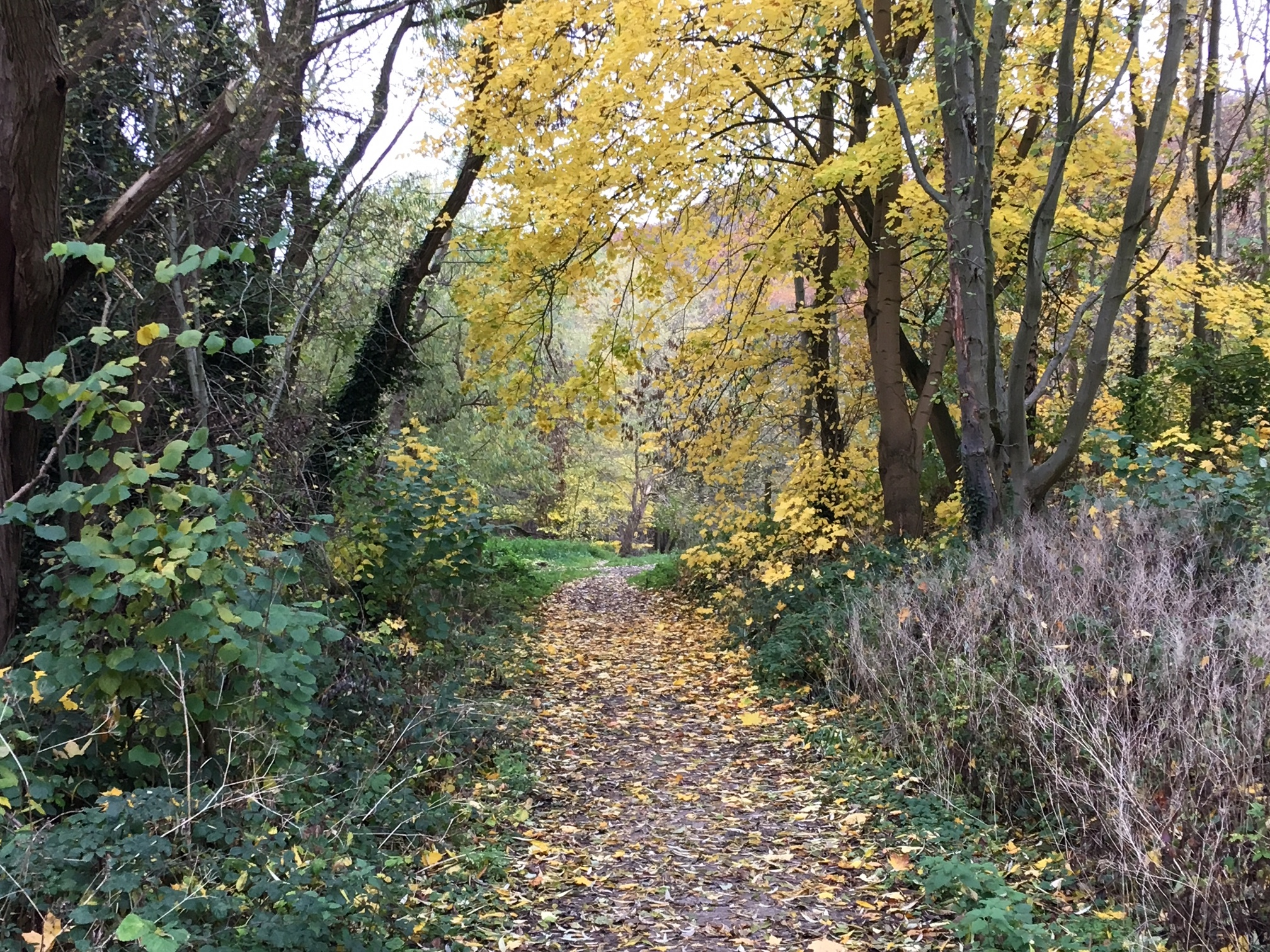 Grove Lane Entrance to Woodhouse Ridge © RT