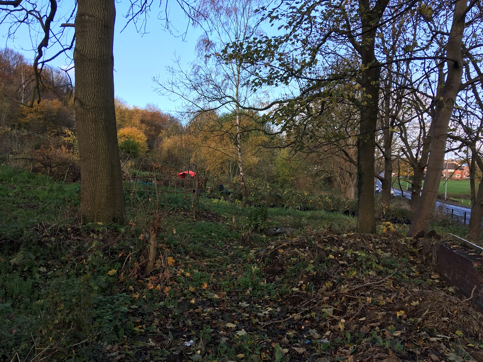 Bandstand Allotments, below Woodhouse Ridge © RT