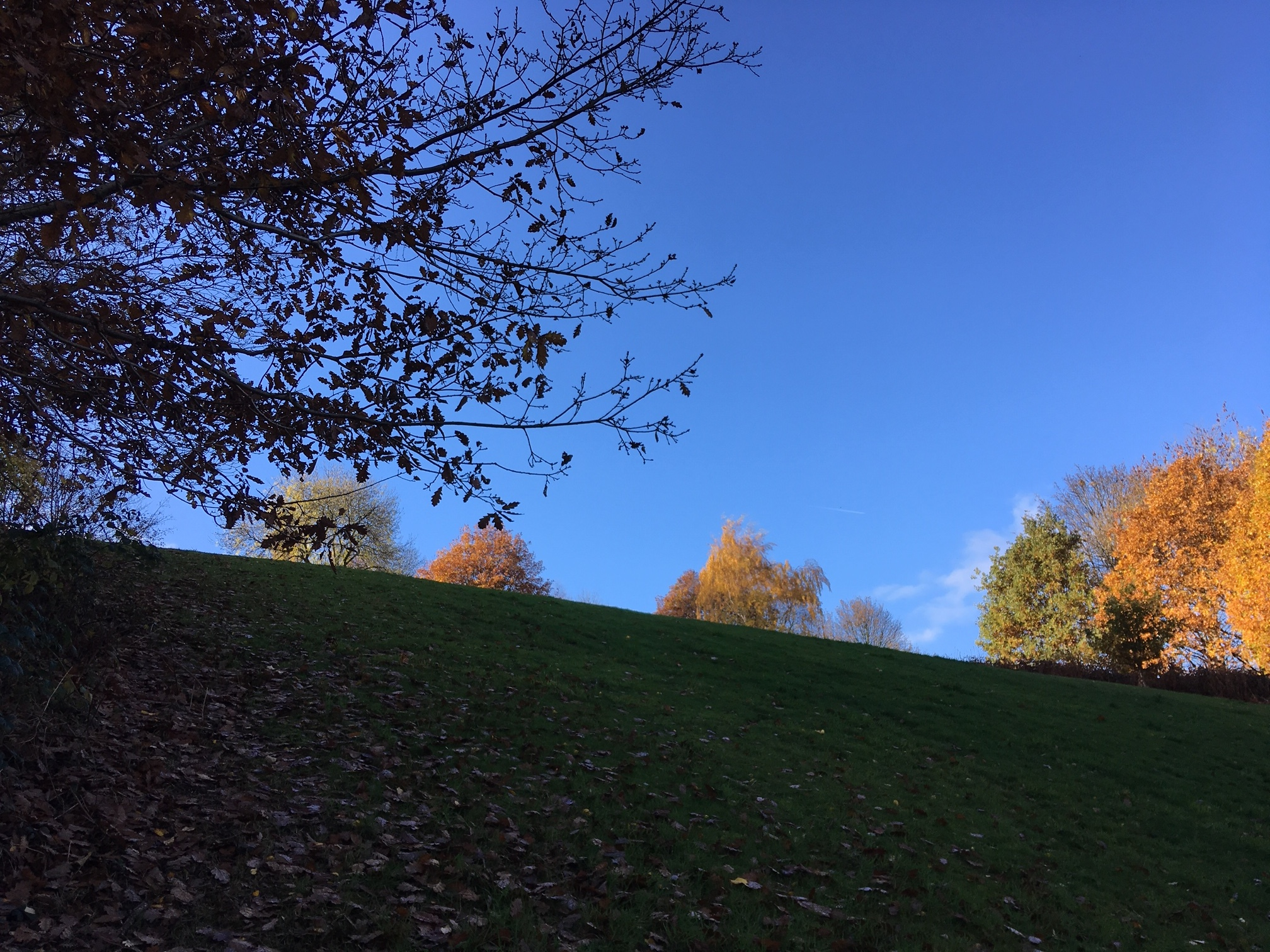 Cardboard Hill, Woodhouse Ridge © RT