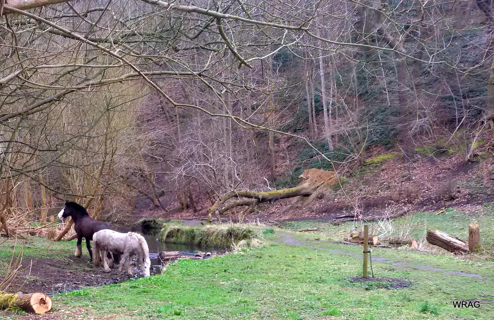Bottom Meadow, Woodhouse Ridge © NL