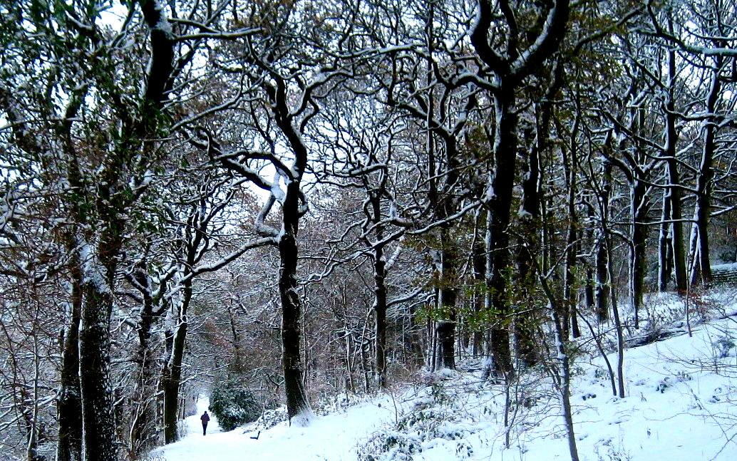 Batty's Wood, Woodhouse Ridge © NL