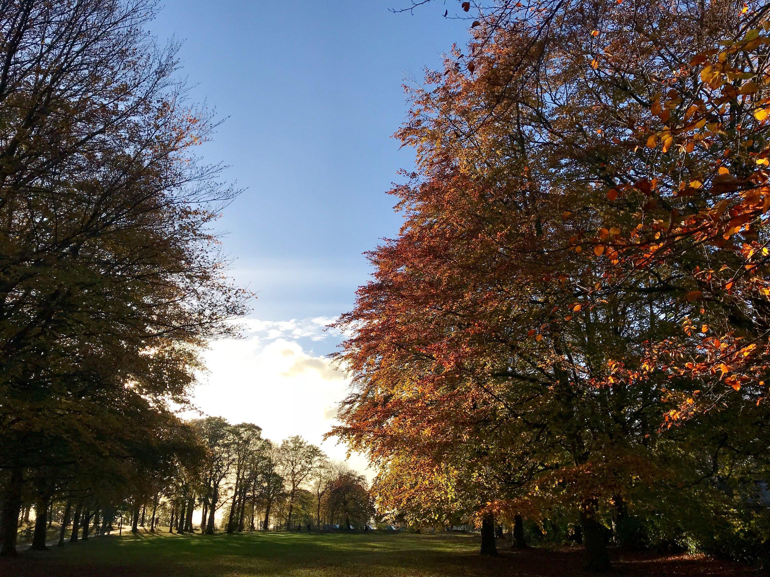 Beckett Park © HP