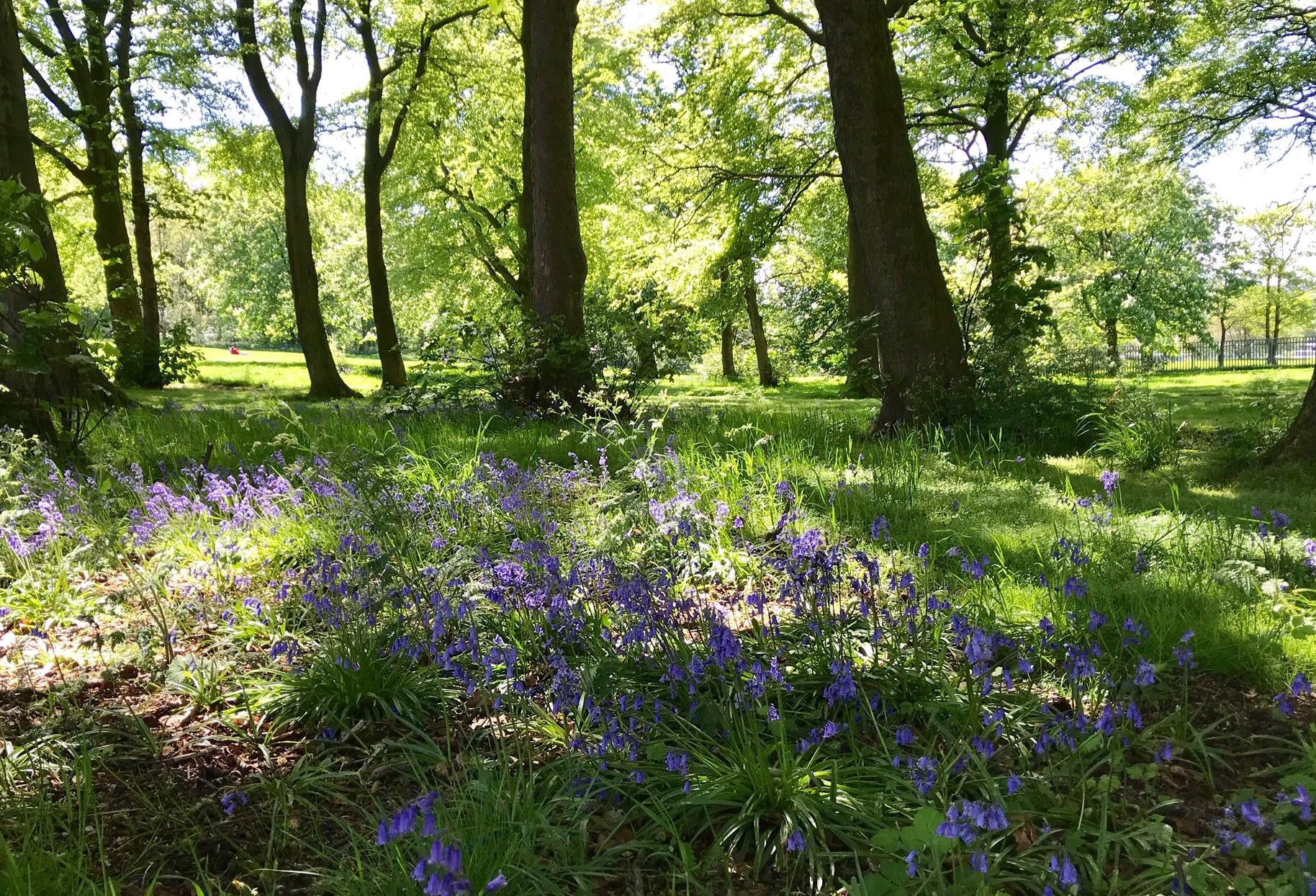 Beckett Park by Batcliffe Wood © HP