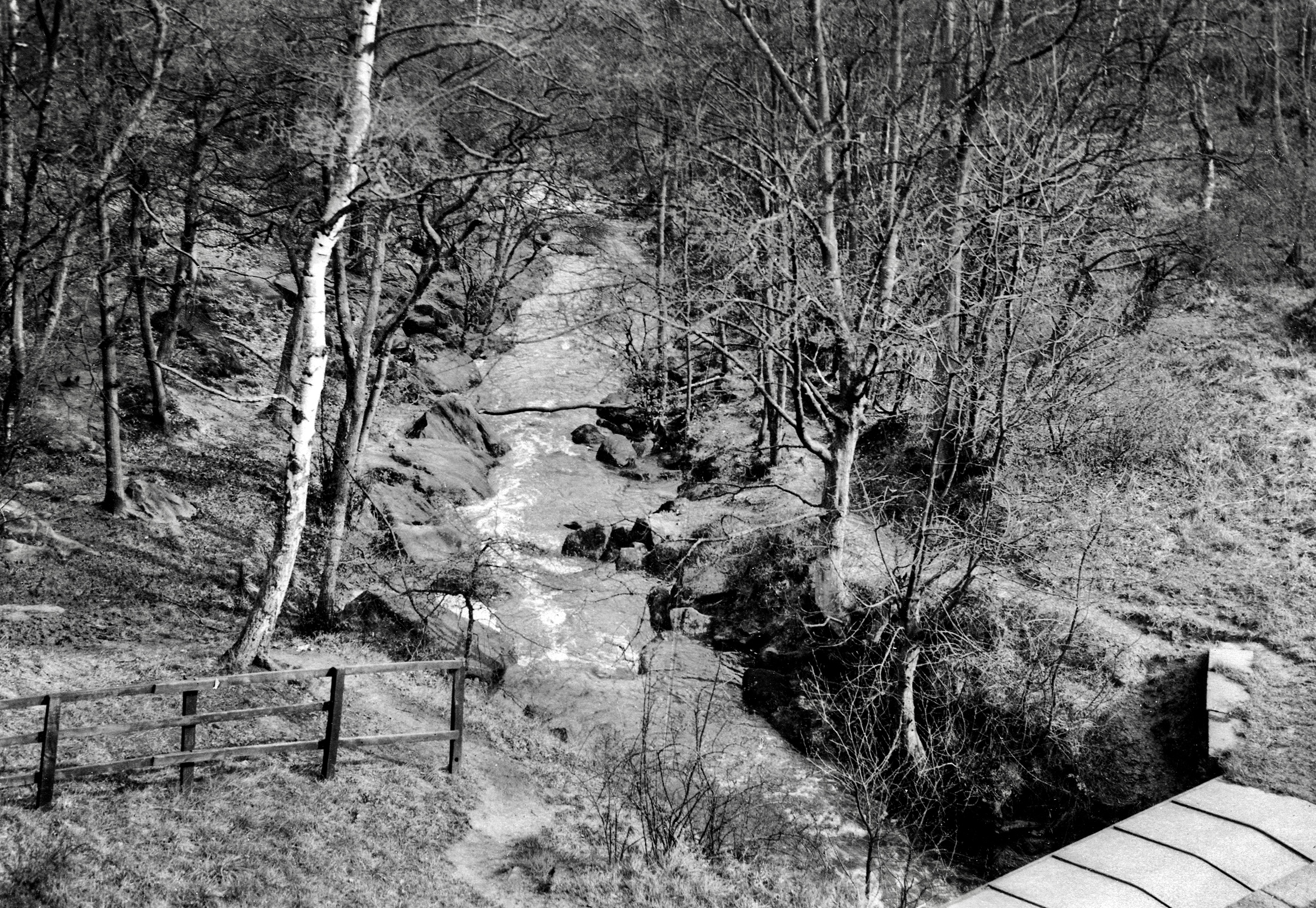 The Hollies, Meanwood Beck Trout Stream, undated