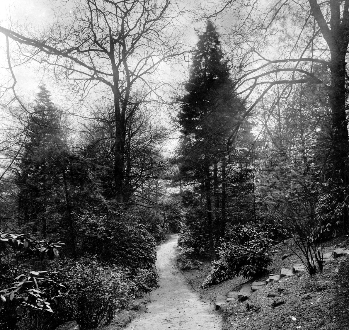 The Hollies, Parkland Pathway, 1924