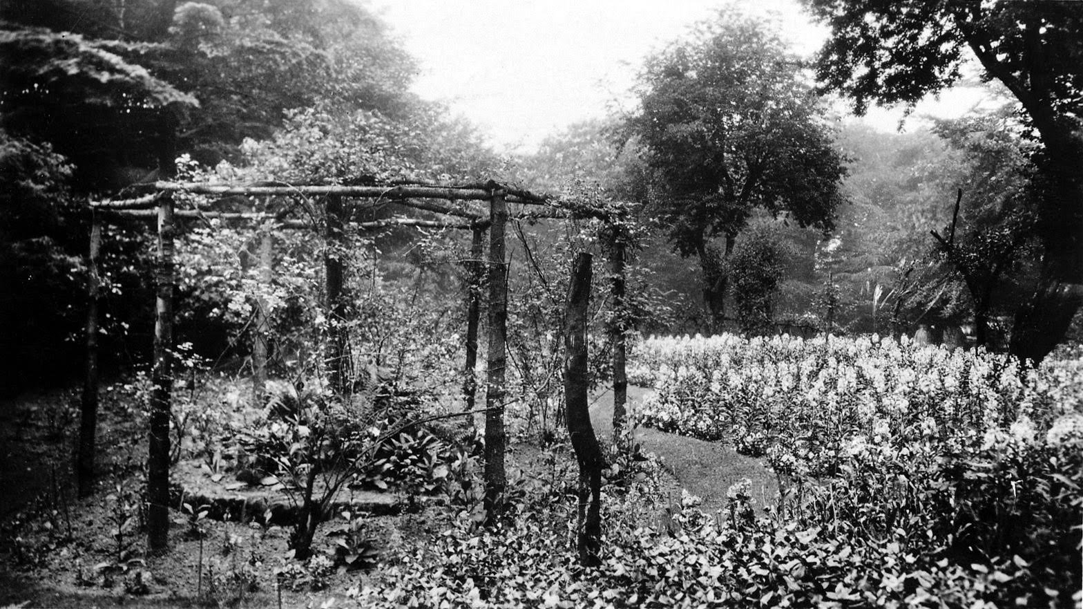 The Hollies, the Old Garden, 1928