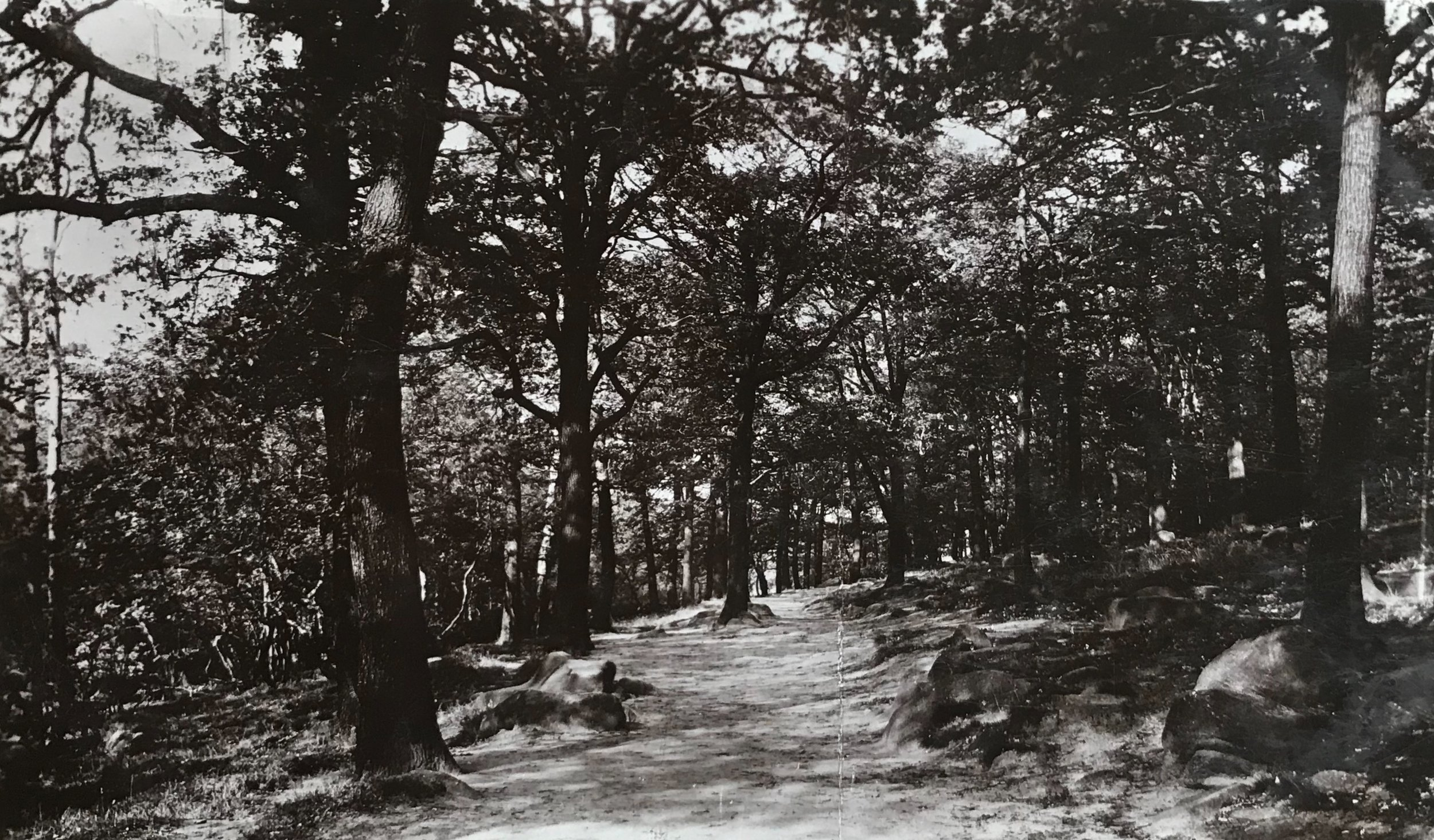 Path through Meanwood Woods, Early 1900s