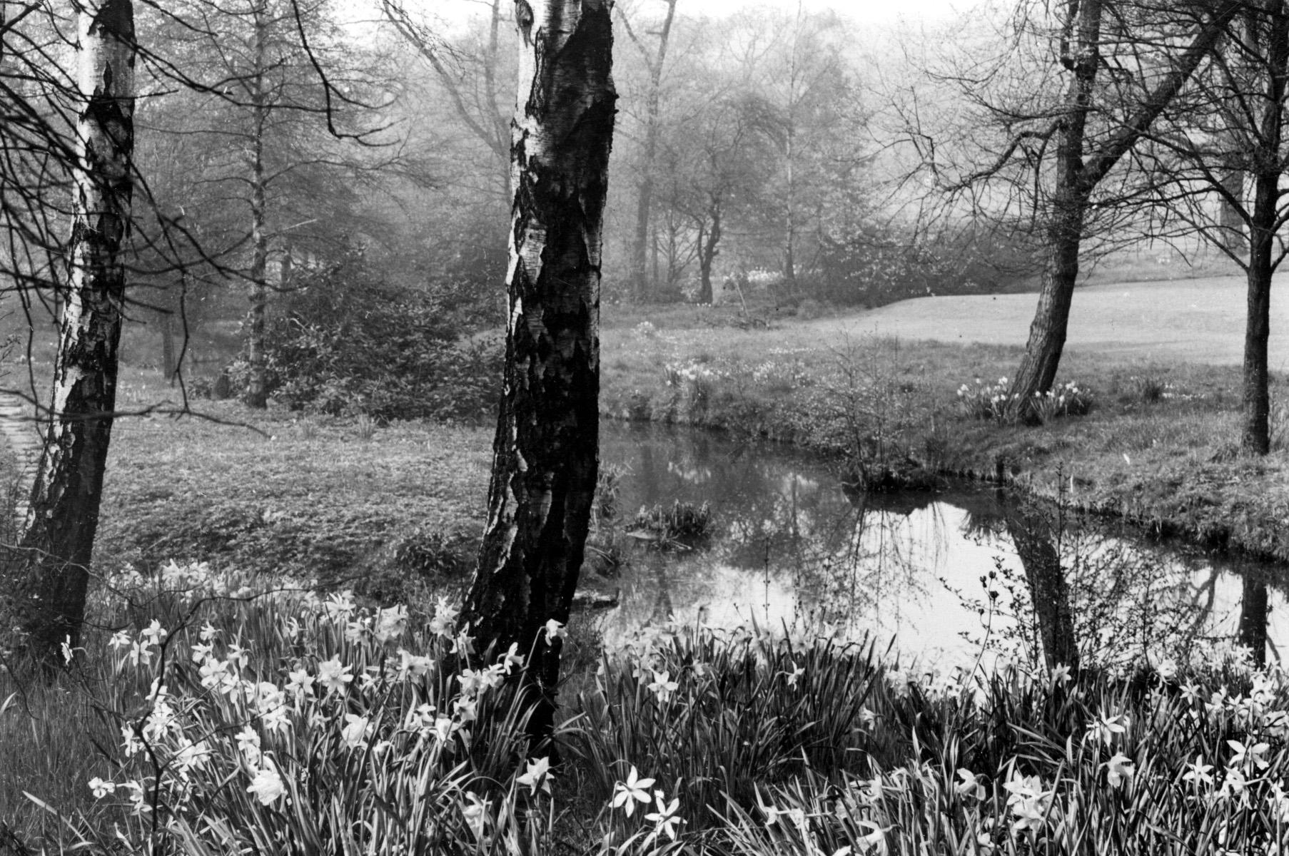 Meanwood Park in Springtime, undated