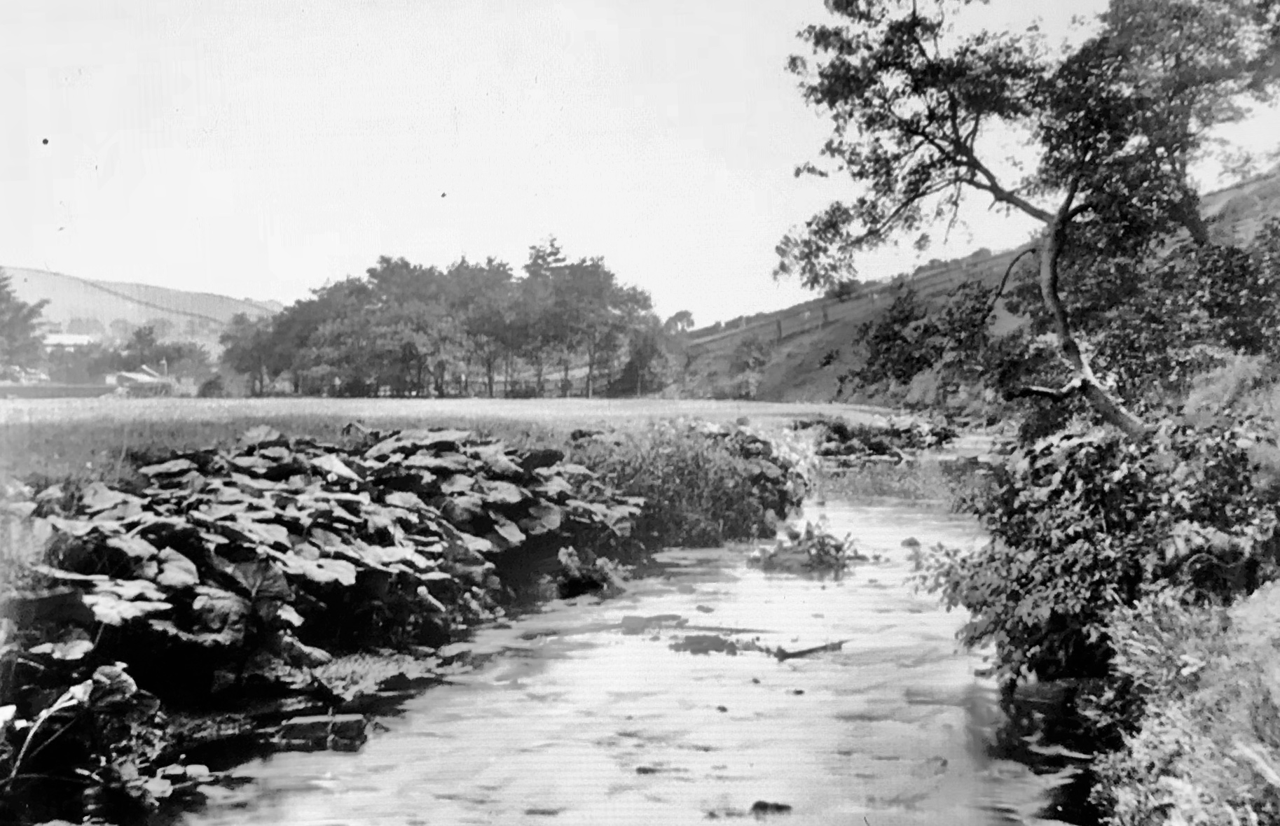 Meanwood Valley, down Meanwood Beck, 1889