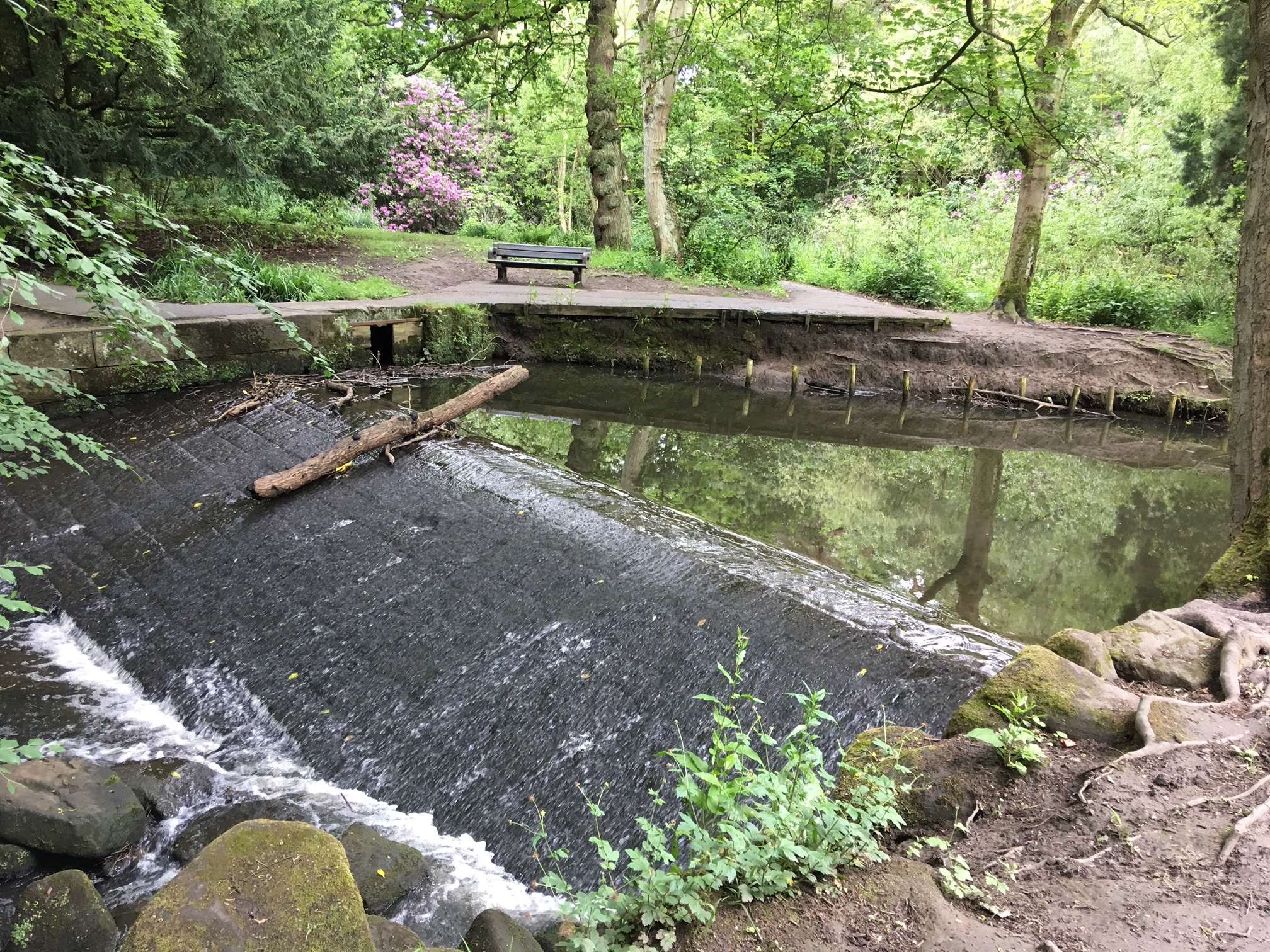 10  Whalley Dam and source of mill stream, for Meanwood Tannery, 2019