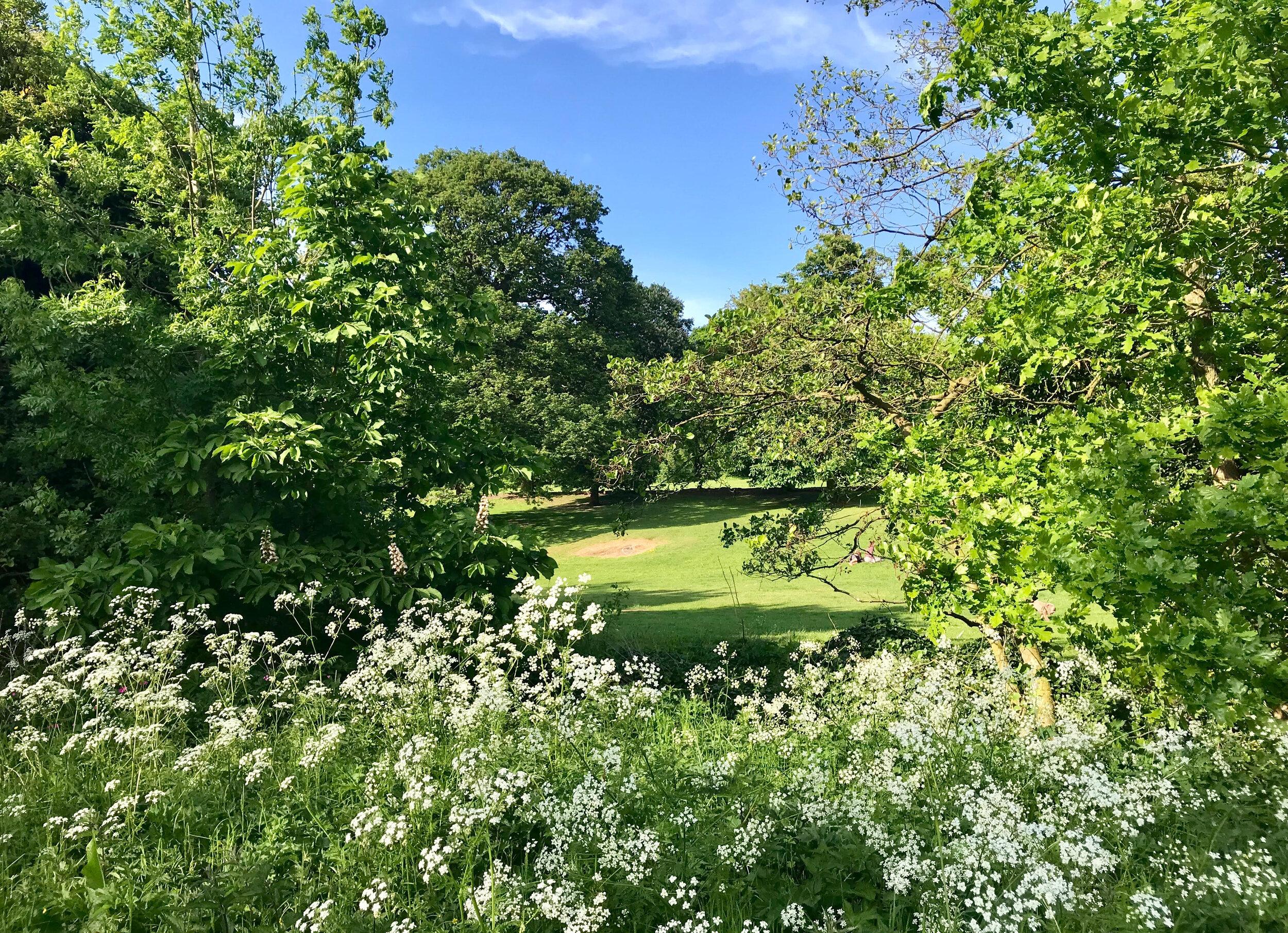 Grassland, Meanwood Park © HP