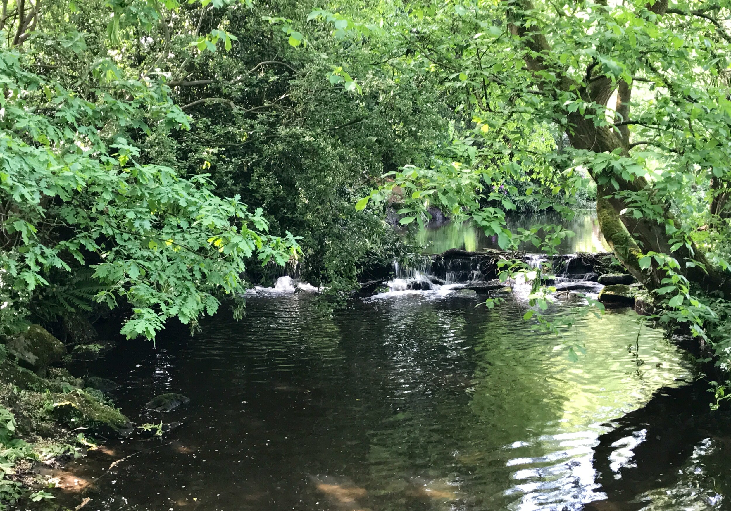 Weir, Meanwood Beck © HP