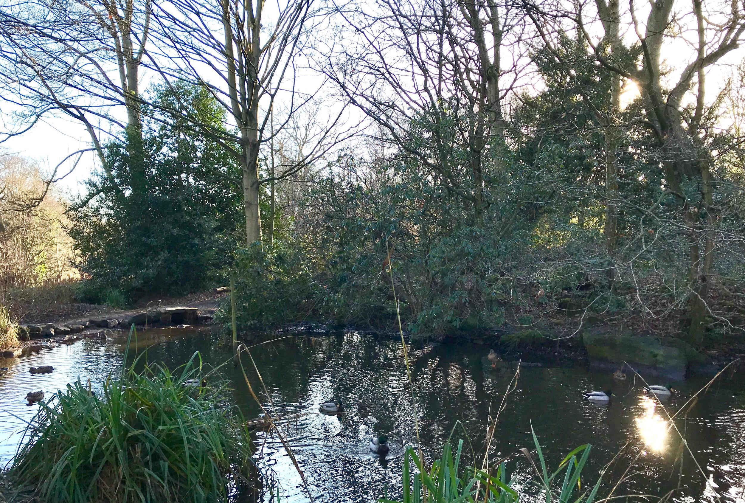Henry's Pond, Meanwood Park © HP