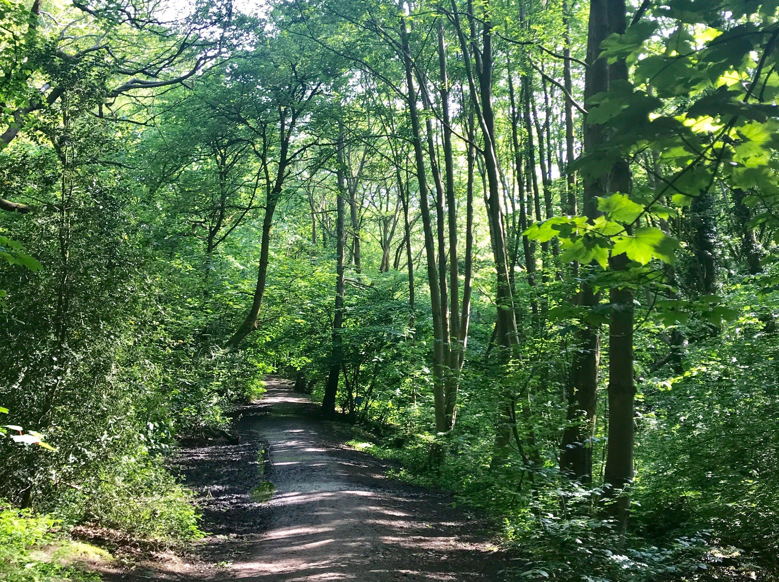 Woodland, Meanwood Park © HP