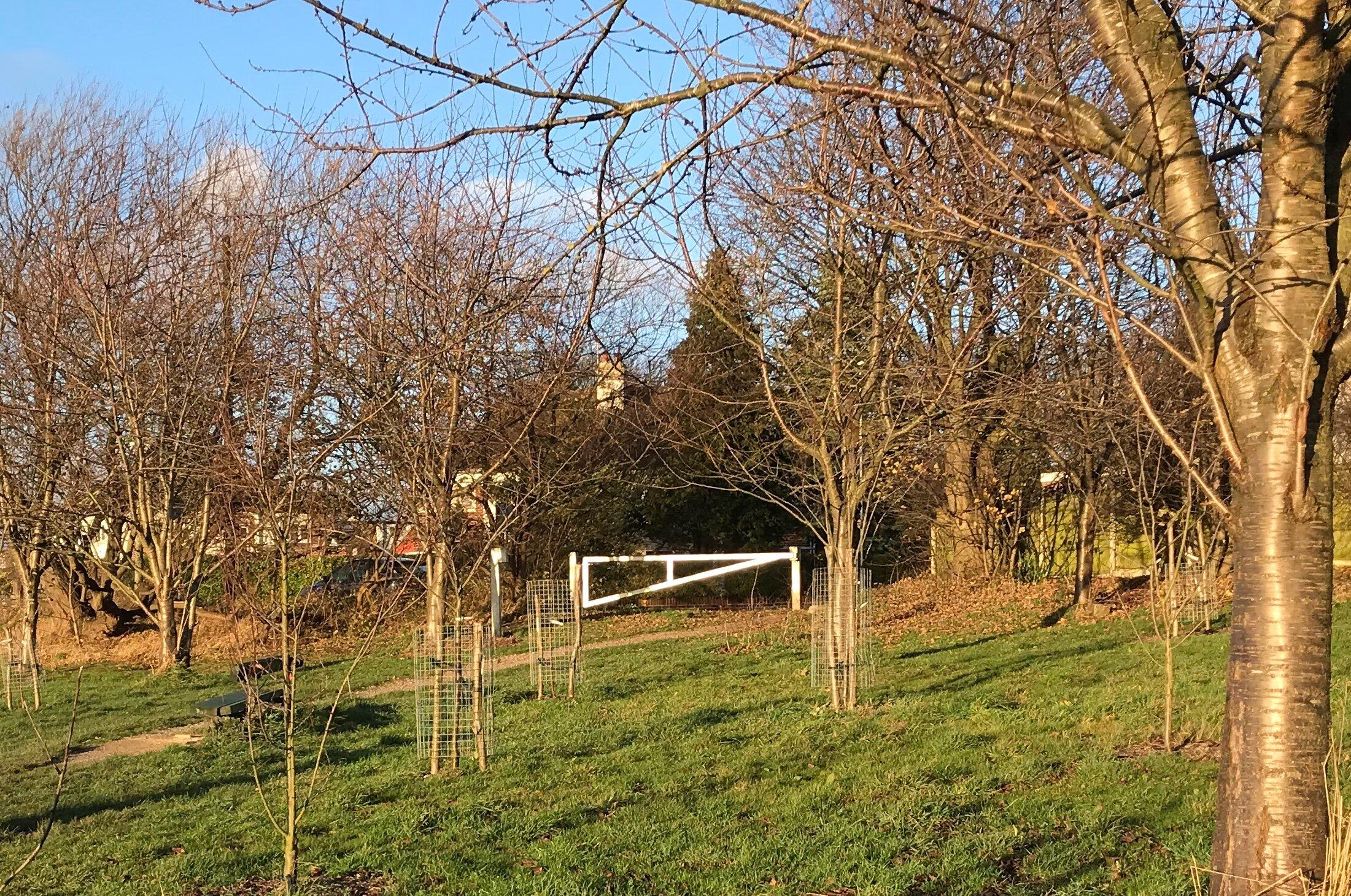 Community Orchard, West Park Fields © HP