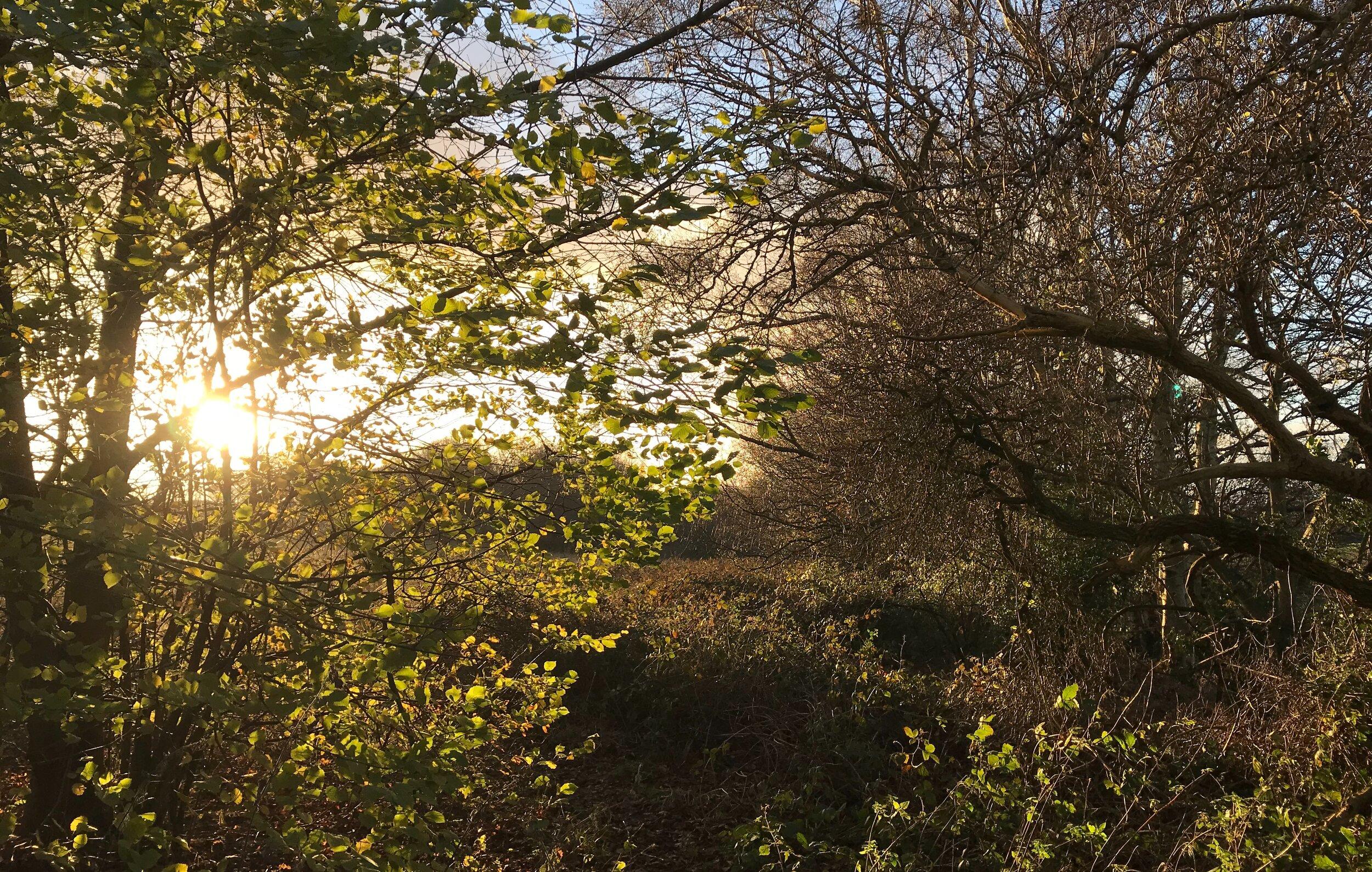 West Park Fields © HP