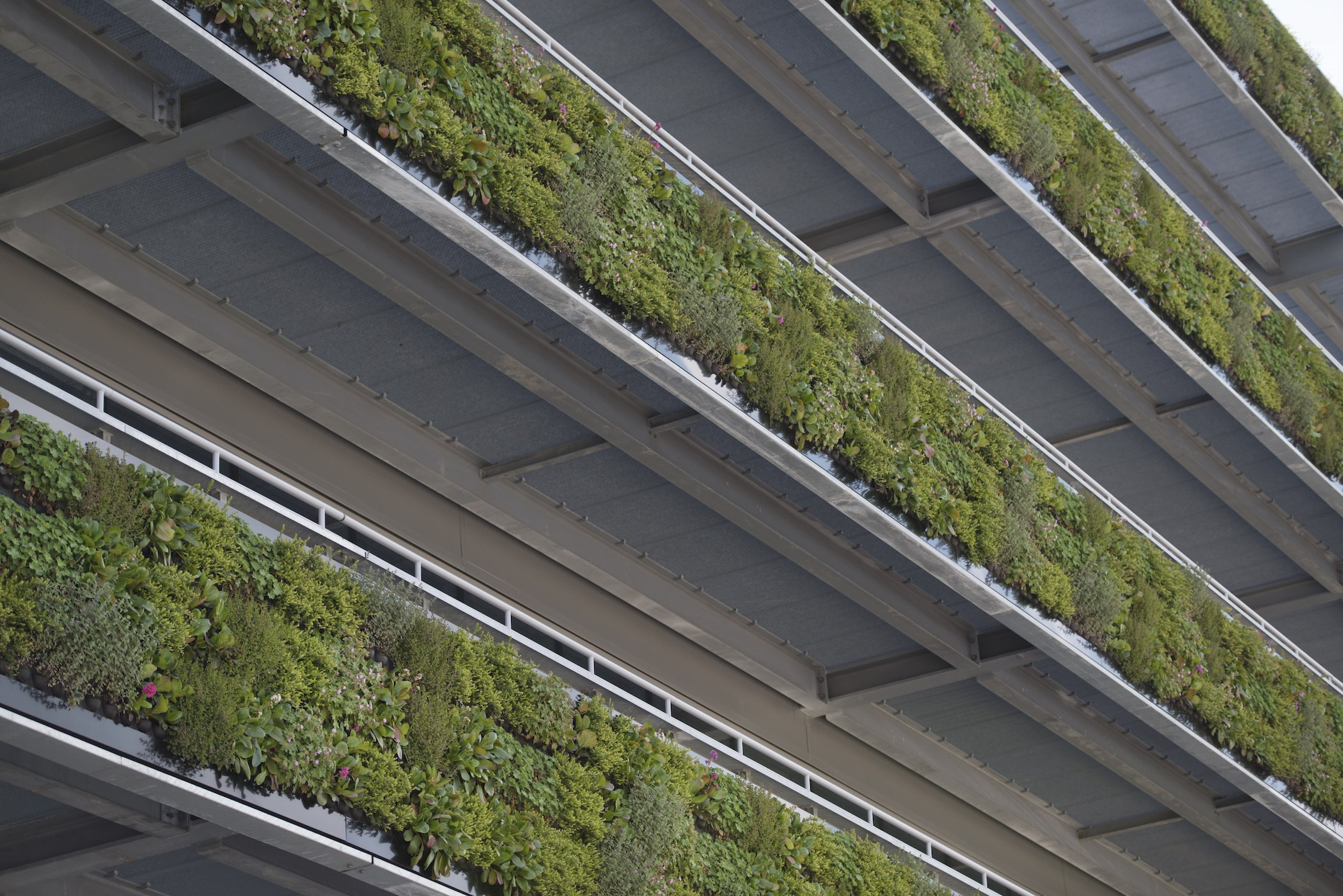 Living Green Wall System by Suite Plants