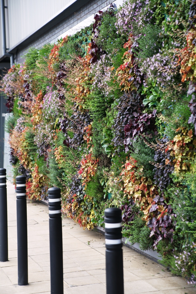 Outdoor Living Wall by Suite Plants in Bracknell - Berkshire, England