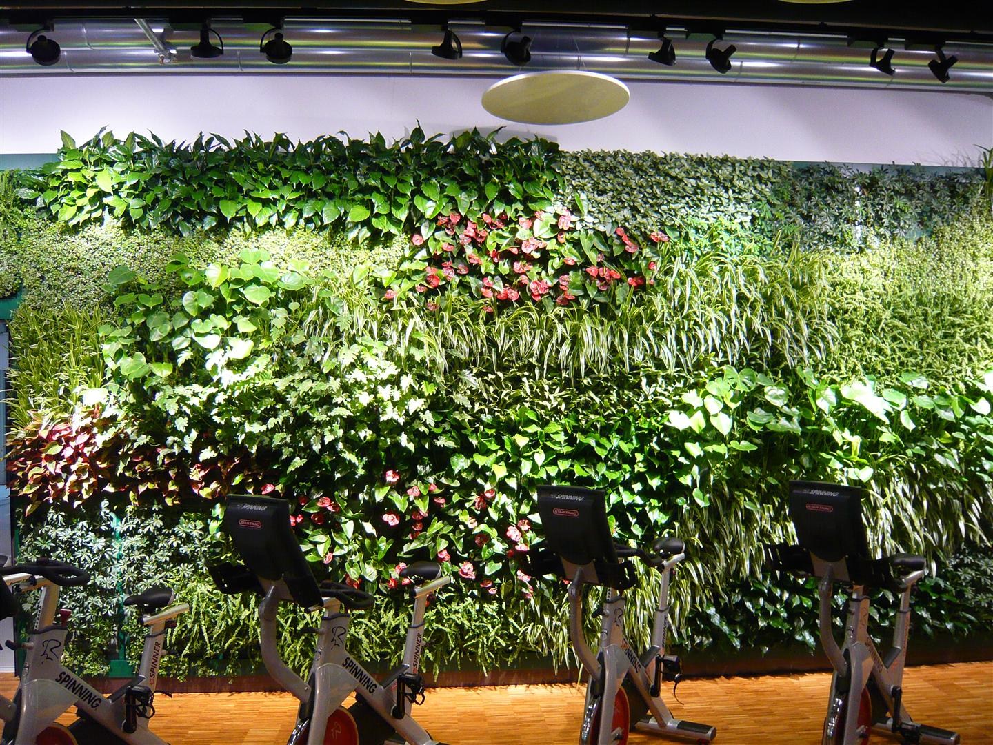 Extensive Indoor Green Wall at a Fitness Center in Nürnberg, Germany
