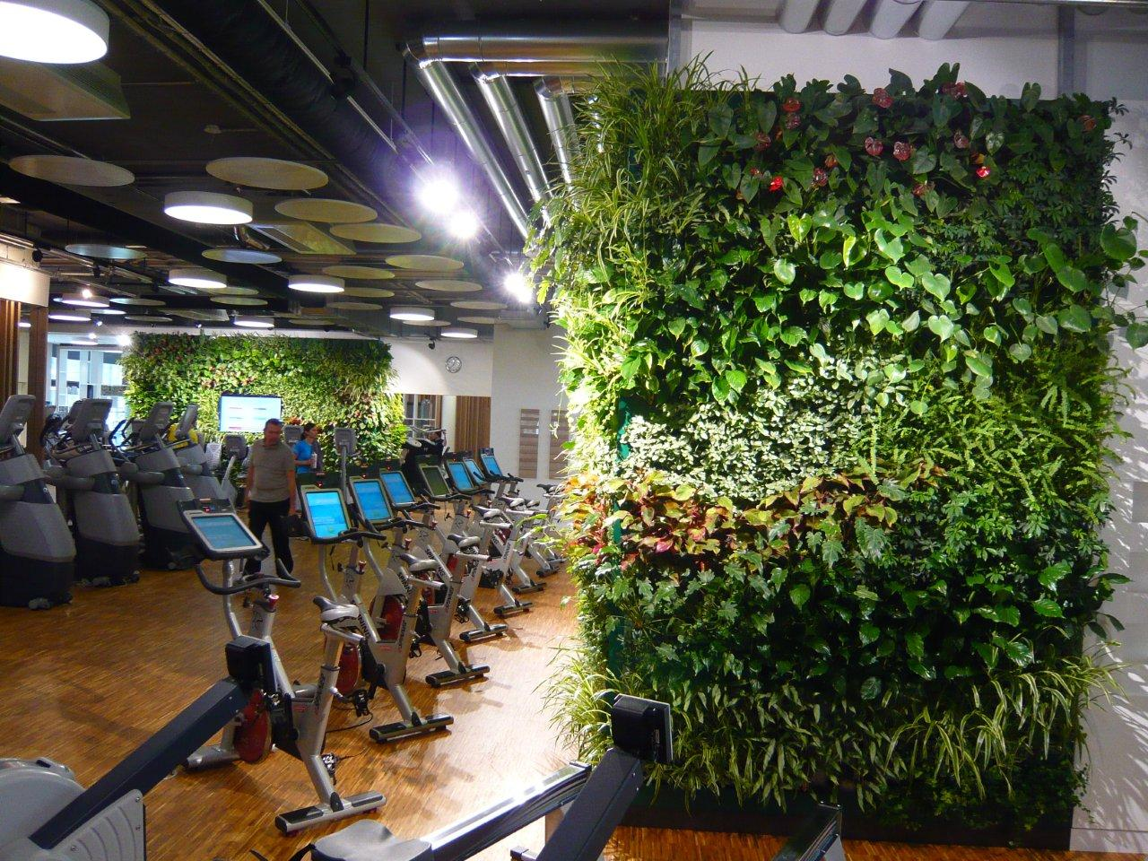 Plants in interior design - health and fitness club