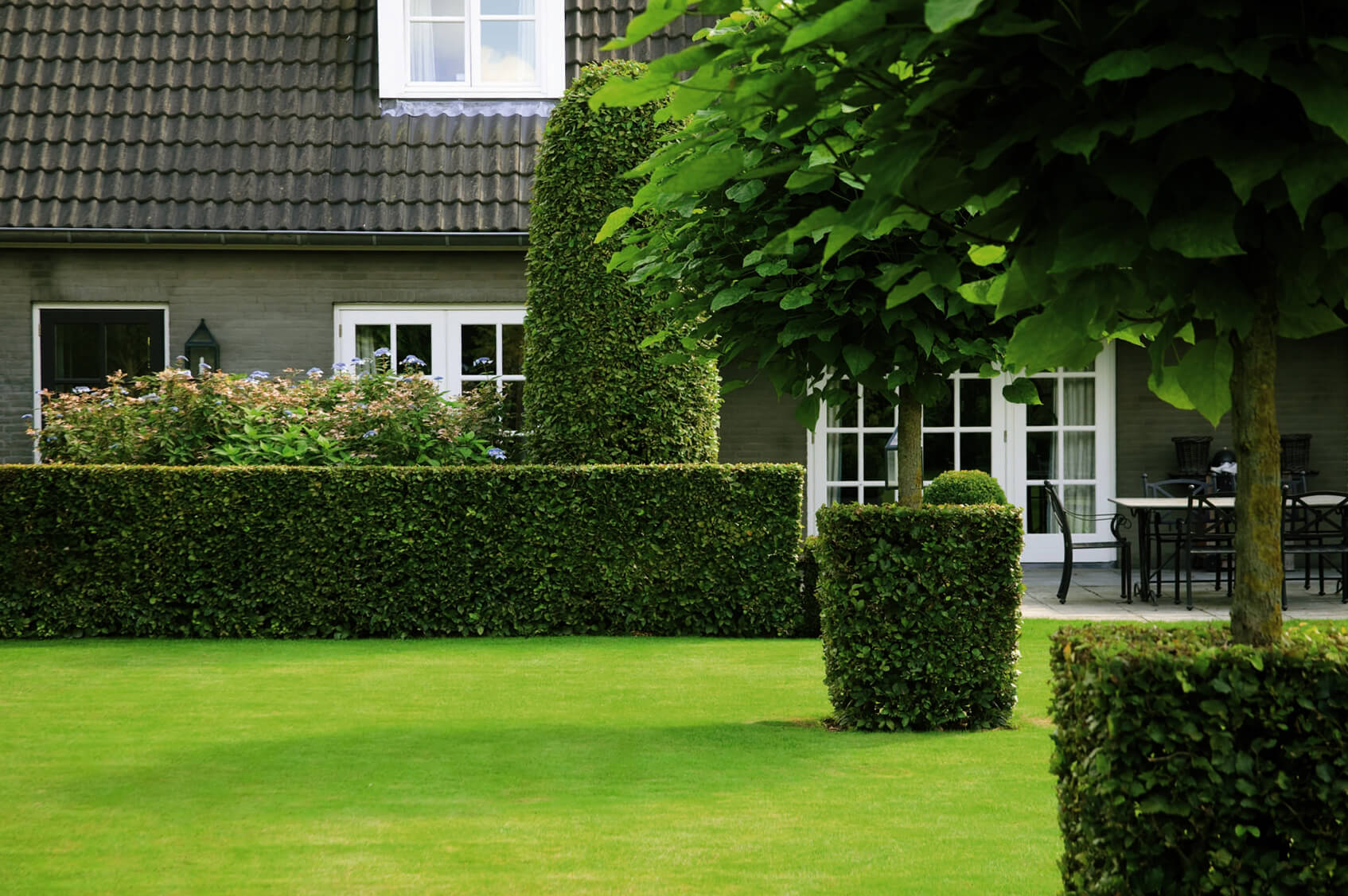 Ready Grown Ivy Hedges 4' tall